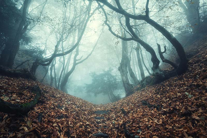 A horizontal picture of a sinister looking forest with a path running through it on a misty, foggy evening.