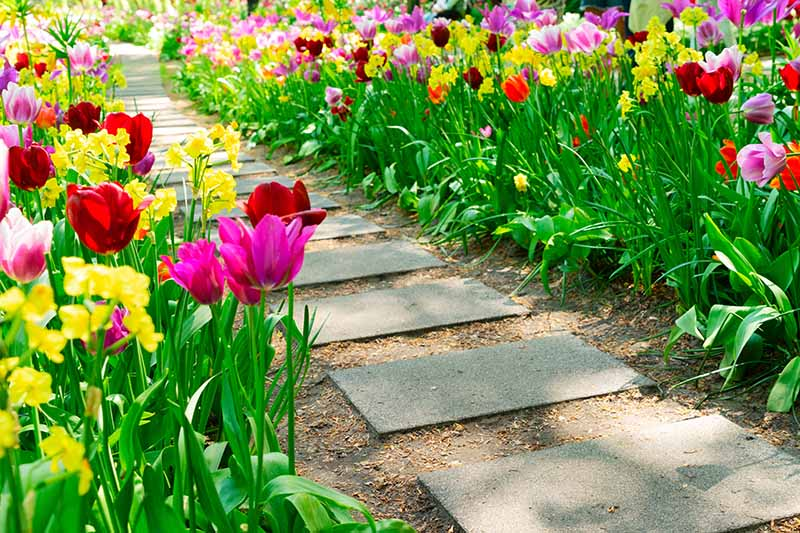 A close up horizontal image of a concrete pathway between two garden borders planted with a variety of different flowering plants.