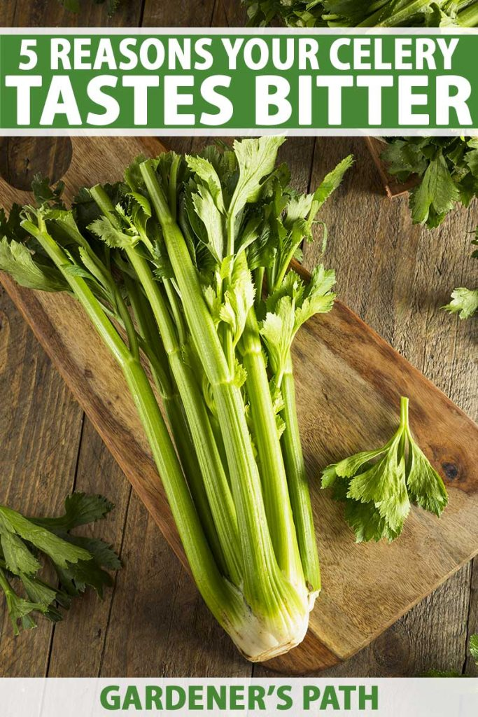 A close up vertical image of a freshly harvested bunch of celery stalks on a wooden chopping board set on a wooden surface. To the top and bottom of the frame is green and white printed text.
