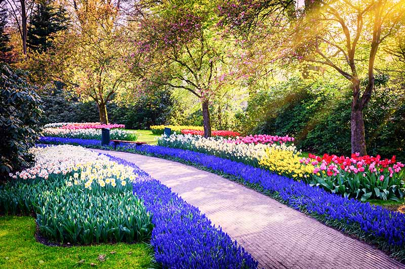 A horizontal image of a formal garden planted with a variety of spring-flowering bulbs surrounded by trees and shrubs with a path in between the plantings.