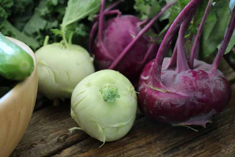 A close up horizontal image of light green and purple kohlrabi freshly harvested, cleaned, and set on a wooden surface. To the left of the frame is wooden bowl with various vegetables.