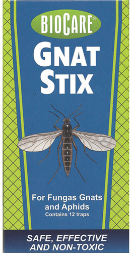 A close up vertical image of the packaging of BioCare Gnat Stix insect traps for indoor plants.