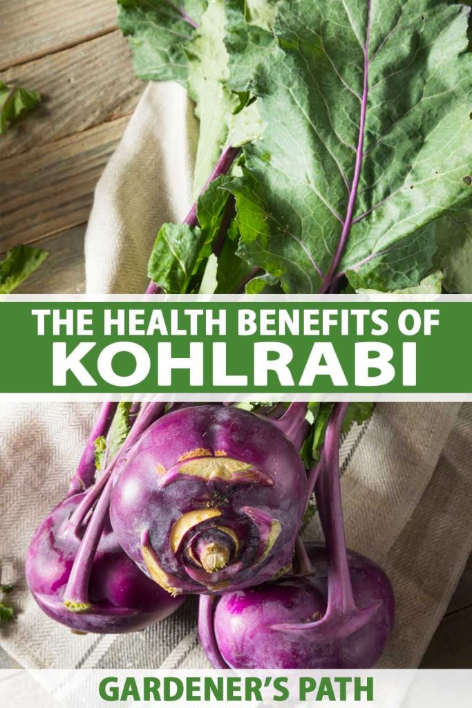A close up vertical image of a freshly harvested purple kohlrabi with the tops still attached set on a fabric on a wooden surface. To the center and bottom of the frame is green and white printed text.