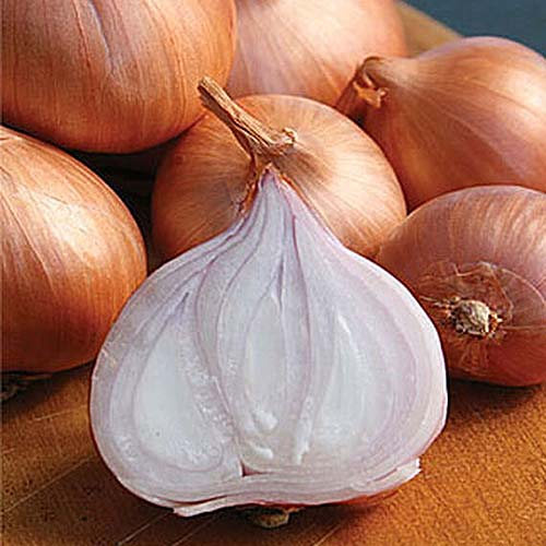 A close up square image of of a pile of 'Holland Red' shallots with one sliced in the foreground set on a wooden surface.