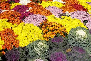 How to Choose Flowering Annuals for Cold Climates