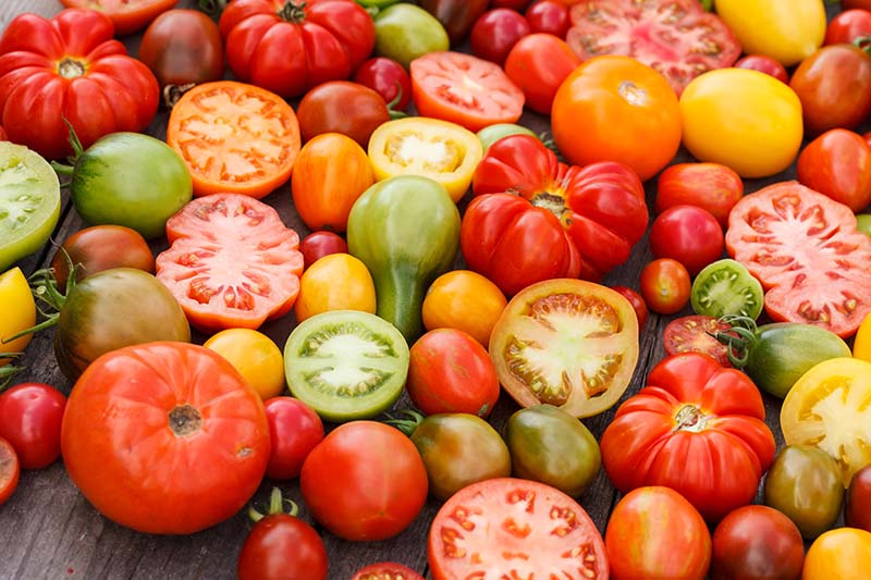 A close up horizontal image of tomatoes in various shapes, colors, and sizes, some sliced and others whole, set on a wooden surface.