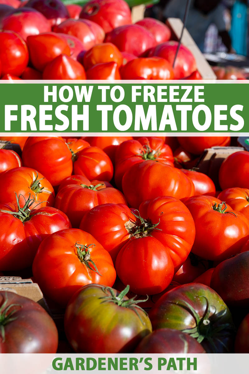 A close up vertical image of a large pile of fresh, ripe tomatoes pictured in bright sunshine. To the center and bottom of the frame is green and white printed text.