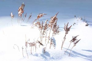 How to Winterize Astilbe Plants: 5 Easy Steps