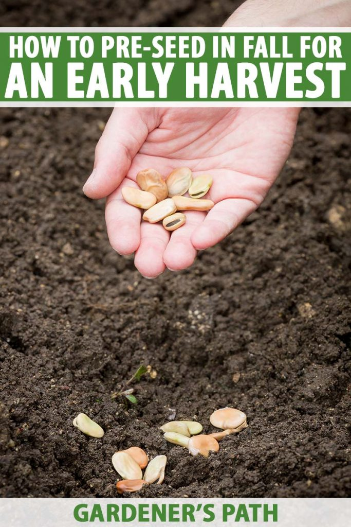 A close up vertical image of a hand from the top of the frame holding seeds in the palm, planting them in dark, rich soil in the autumn garden. To the top and bottom of the frame is green and white printed text.