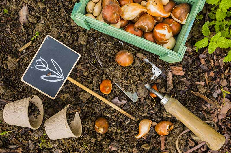 A close up horizontal image of a garden trowel set on the ground with a box of spring-flowering bulbs to the top of the frame. To the left of the frame is a plant marker and biodegradable pots.