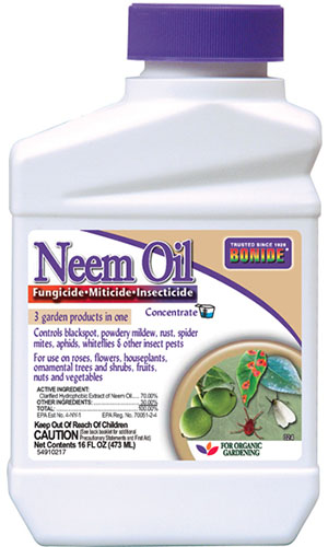A close up vertical image of the packaging of a plastic container of Bonide Neem Oil pictured on a white background.