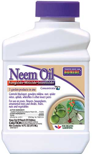 A close up vertical image of the packaging of Bonide Neem Oil pictured on a white background.