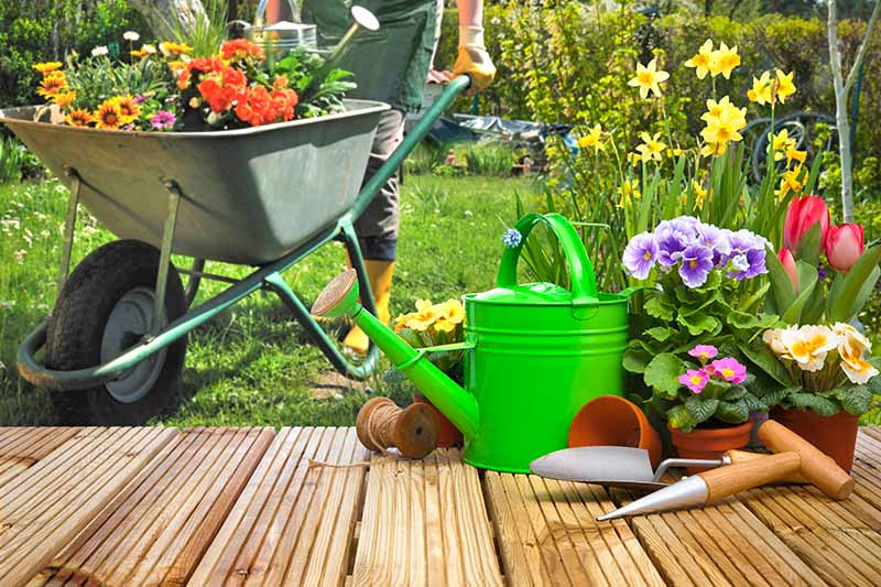 A horizontal image of a gardener and a wheelbarrow filled with different colored flowers ready for planting. To the right of the frame is a green watering can, gardening tools, and potted plants set on a wooden deck.
