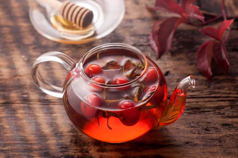 A close up horizontal image of a small glass teapot brewing fresh rose hips, set on a dark wood surface, with a glass plate and honey in the background.
