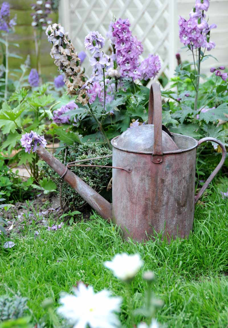 A vertical close up image of a rusting watering can set on a lawn with flowers in soft focus in the background.