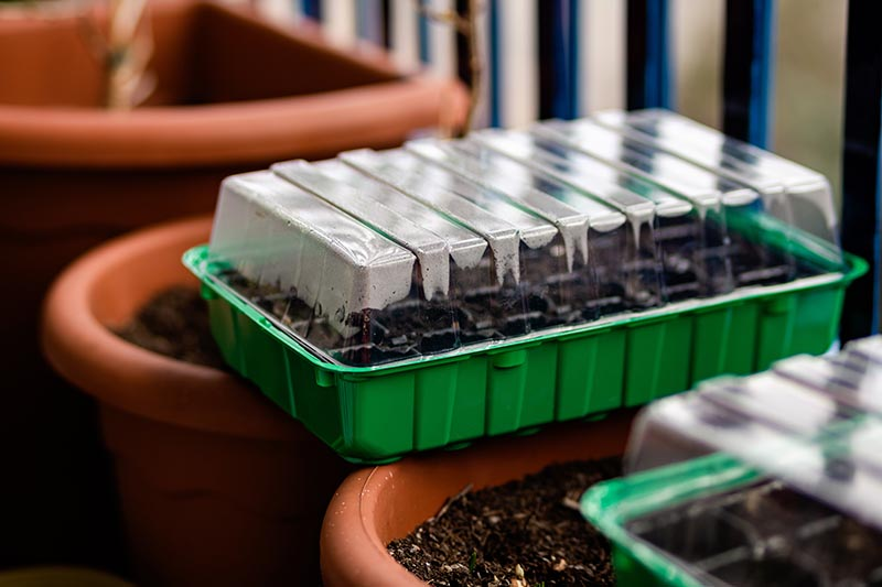 A close up horizontal image of green plastic seedling trays with humidity domes set on top of plastic pots.
