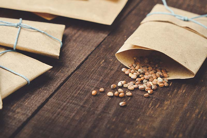 A close up horizontal image of small brown paper envelopes with pips spilling out of one of them onto a wooden surface.