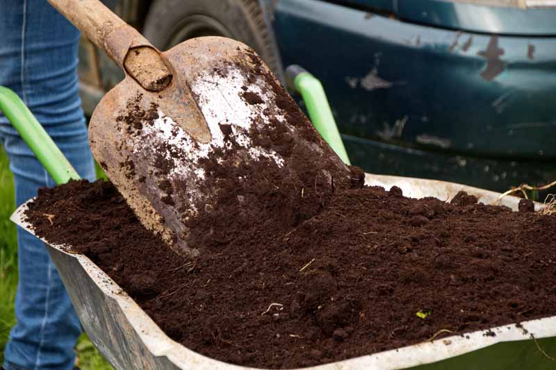 A close up horizontal image of a wheelbarrow filled with dark, rich compost, with a spade and a car in the background.