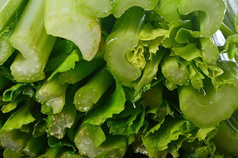 A close up horizontal image of Apium graveolens stalks sliced.