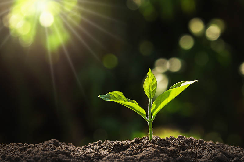 A close up horizontal image of a small seedling growing under a grow light on a dark background.
