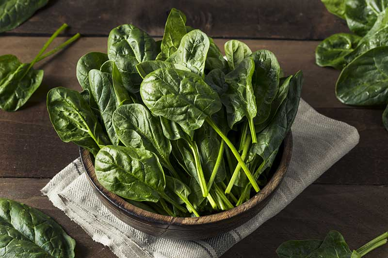 A close up horizontal image of freshly harvested spinach in a wooden bowl set on a folded fabric on a wooden surface.