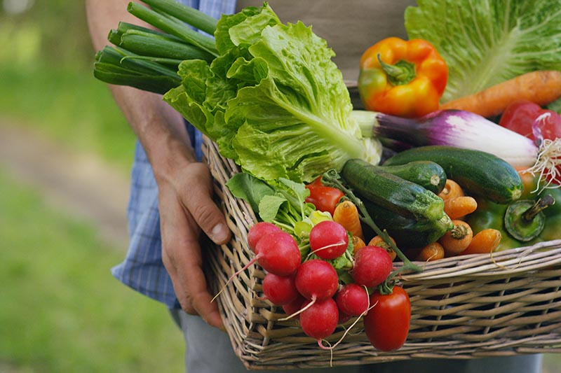 A close up horizontal image of a man carrying a wicker basket filled with freshly harvested vegetables pictured on a soft focus background.