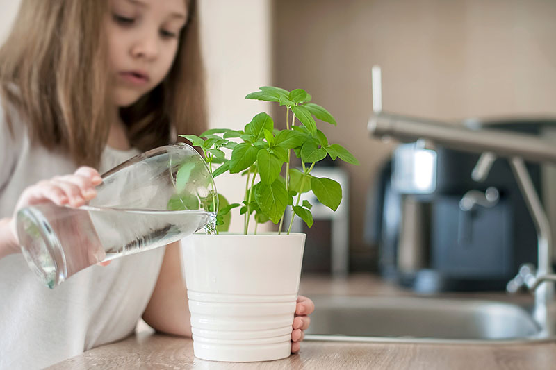 A close up horizontal image of a young girl pouring water from a glass into a small white ceramic pot growing herbs.