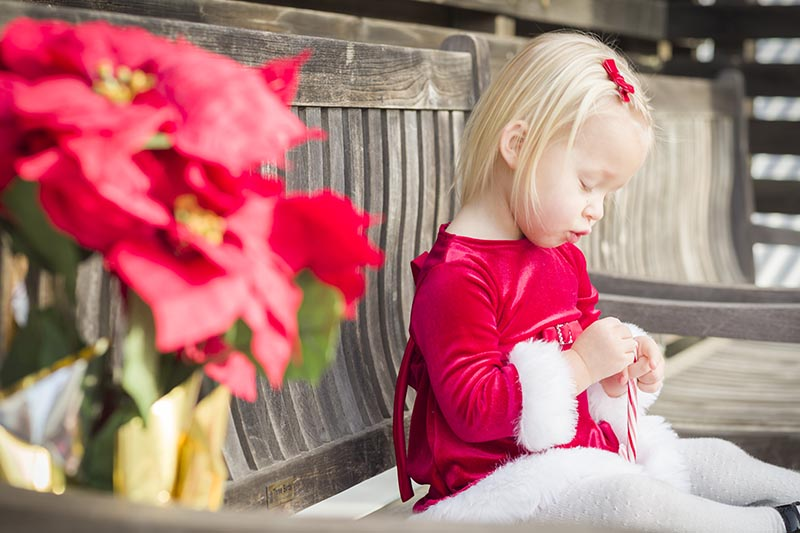 A close up horizontal image of a child dressed in a red and white festive outfit sitting on a wooden bench with a red plant to the left of the frame in soft focus.