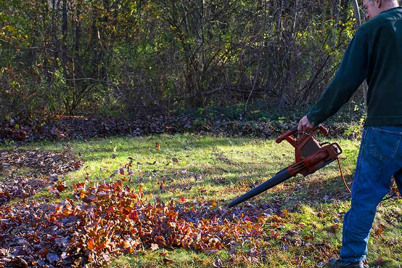 A close up horizontal image of a man clearing up the backyard in fall, pictured in light sunshine with shrubs in soft focus in the background.