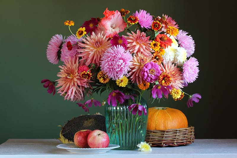A close up horizontal image of a beautiful dahlia flower arrangement surrounded by apples and a pumpkin, set on a white wooden table pictured on a soft focus background.