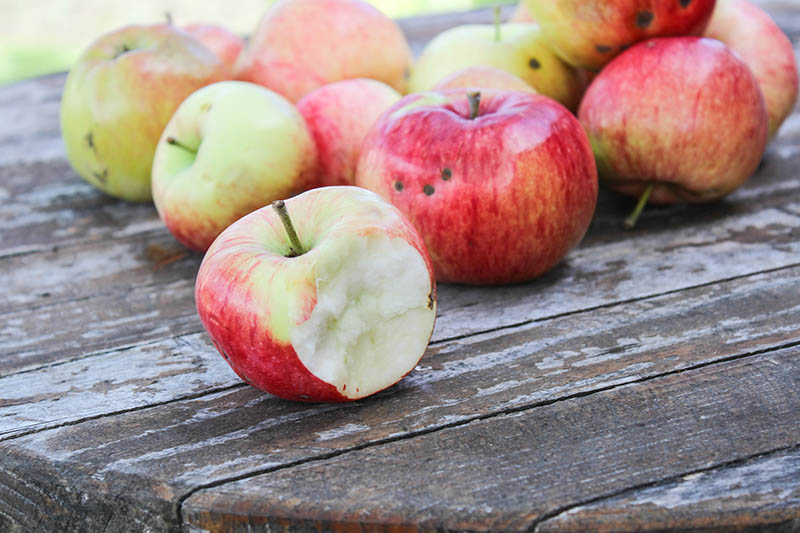 A close up horizontal image of freshly harvested apples set on a wooden surface. One or two have a chunk bitten out of them, pictured in light sunshine on a soft focus background.