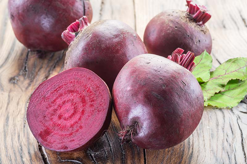 A close up horizontal image of deep red beetroots freshly harvested and cleaned and set on a wooden surface.