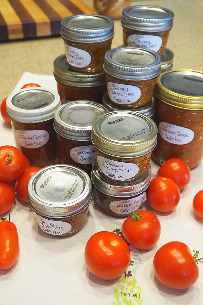 A close up vertical image of a variety of canned sauces made from a fresh tomato harvest from the garden, with ripe fruits scattered around.