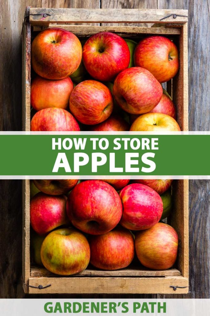 A close up vertical image of a wooden box filled with freshly harvested apples set on a wooden surface. To the center and bottom of the frame is green and white printed text.
