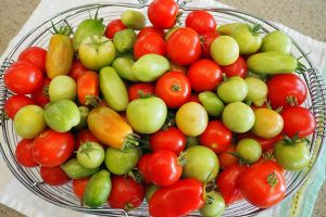 How to Store Your Tomato Harvest