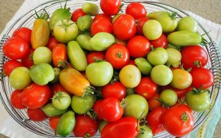 A close up horizontal picture of a metal wire basket containing a selection of red, ripe tomatoes and green unripe fruits set on a cloth on a countertop.