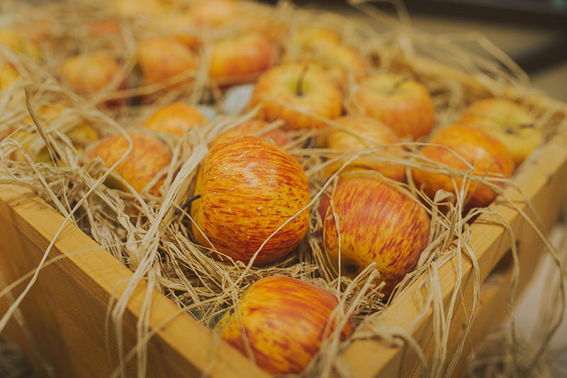 A close up horizontal image of a wooden crate containing freshly harvested apples for long term fresh storage surrounded by straw, pictured on a soft focus background.