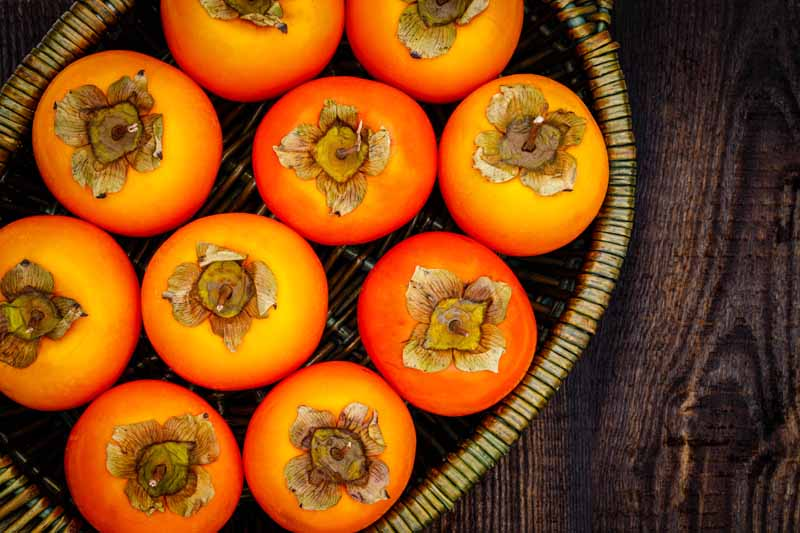 A close up horizontal image of freshly harvested persimmon fruits in a wicker basket set on a wooden surface.