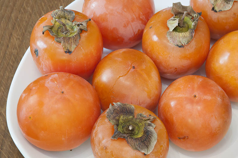 A close up horizontal image of a white plate with a pile of freshly harvested American persimmons set on a wooden surface.