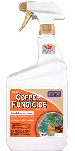 A close up vertical image of a spray bottle of Bonide Copper Fungicide on a white background.