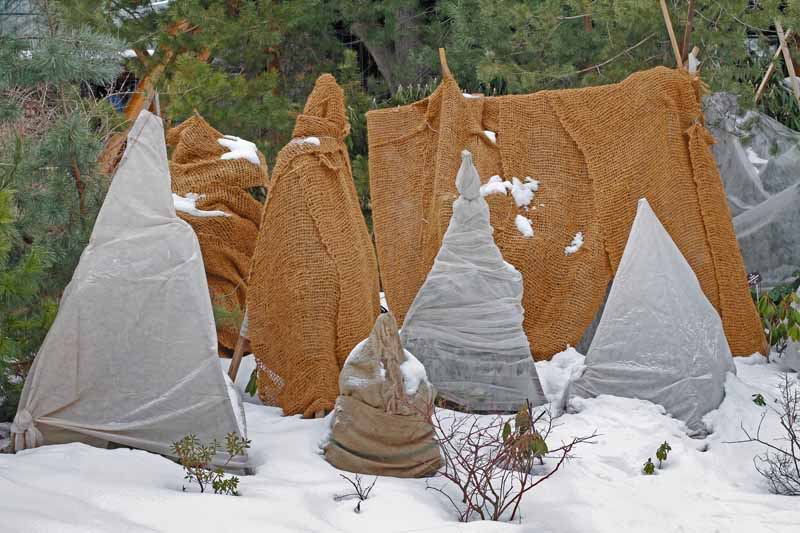 A close up horizontal image of young saplings wrapped in burlap to protect them from snow and ice during the winter months.