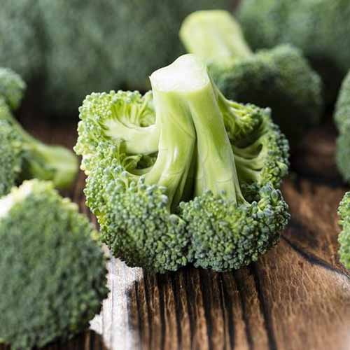 A close up of florets of 'Calabrese' broccoli set on a wooden surface fading to soft focus in the background.