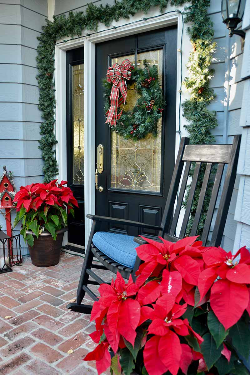 A vertical picture of a front porch decorated with holiday decor including a wreath on the door and two bright red poinsettia plants either side.
