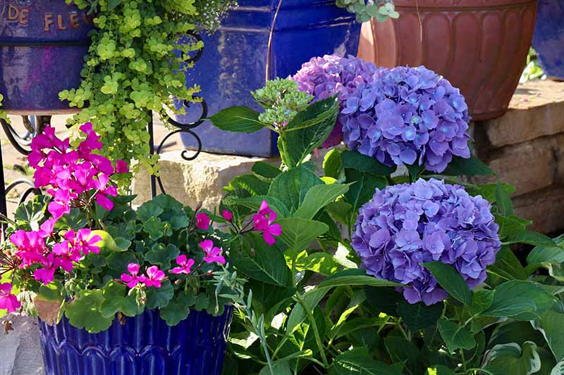 A close up horizontal image of a selection of flowers growing in containers on a sunny patio.