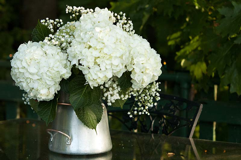 A close up horizontal image of a metal vase with white cut flowers set on an outdoor table, pictured on a soft focus dark background.