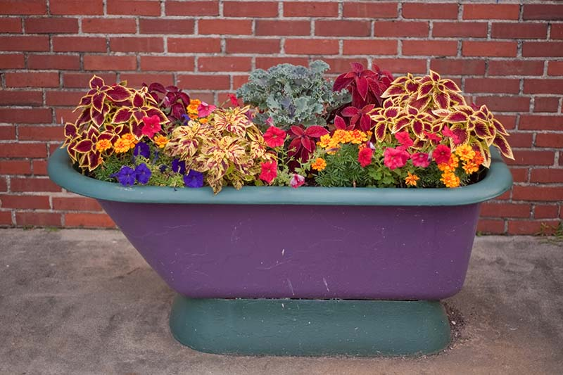 A close up horizontal image of a repurposed bathtub painted purple filled with a colorful array of flowers and foliage plants set on a concrete surface with a brick wall in the background.
