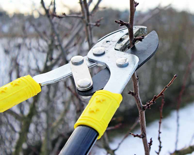 A close up horizontal image of a pair of pruners cutting branches in the winter months. In the background is a winter garden scene with snow on the ground.