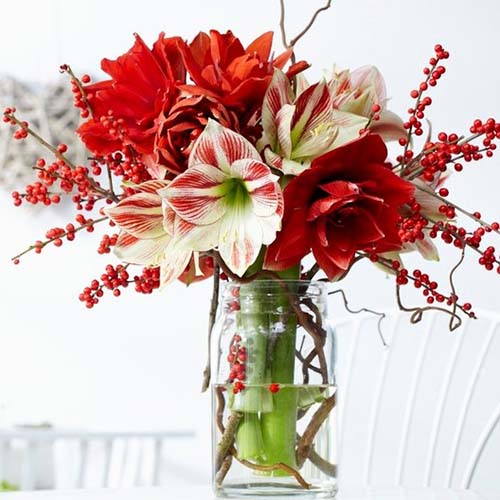 A close up square image of a vase with cut Hippeastrum flowers in red and bicolored pictured on a soft focus background.