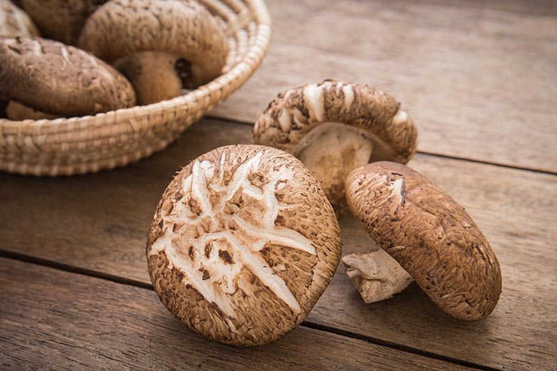 A close up horizontal image of shiitake mushrooms in a wicker basket and set on a wooden surface.