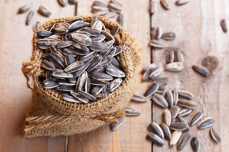 A close up horizontal image of a small burlap container filled with sunflower seeds that are spilling out onto a wooden surface.